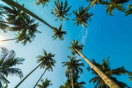 푸른 하늘 배경에서 아름 다운 코코넛 야 자 나무 스톡 콘텐츠