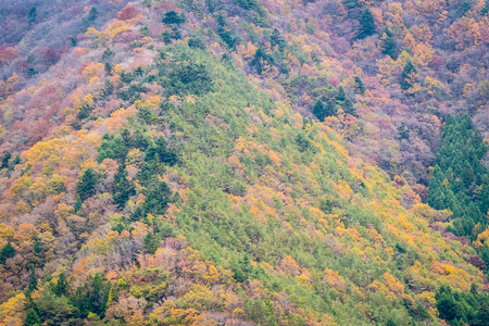 Beautiful landscape a lot of tree with colorful leaf around the mountain in autumn season Imagens - 115505007