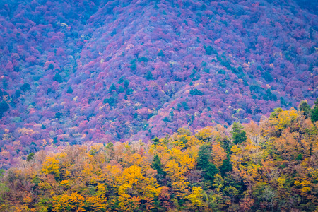 Beautiful landscape a lot of tree with colorful leaf around the mountain in autumn season Imagens