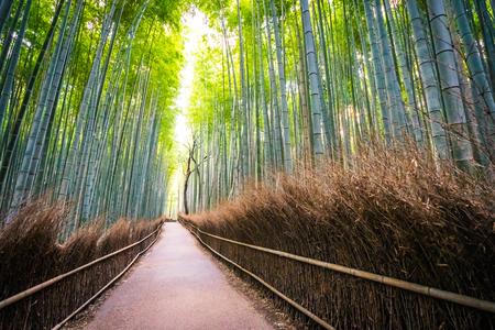 Piękny krajobraz bambusowego gaju w lesie w Arashiyama Kioto w Japonii Zdjęcie Seryjne