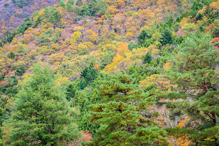 Beautiful landscape a lot of tree with colorful leaf around the mountain in autumn season Imagens - 115495867