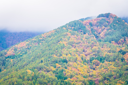 Beautiful landscape a lot of tree with colorful leaf around the mountain in autumn season Imagens - 115503722