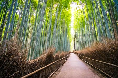 Bellissimo paesaggio di boschetto di bambù nella foresta di Arashiyama Kyoto Japan Archivio Fotografico