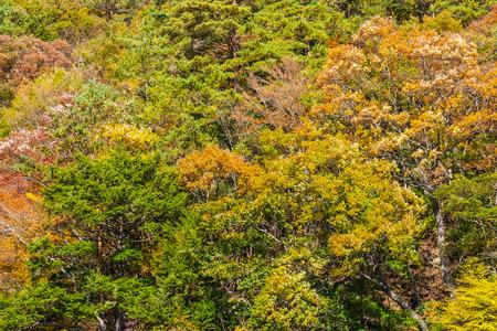 Beautiful landscape with maple leaf tree in autumn season Japan 스톡 콘텐츠