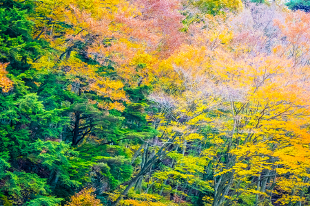 Beautiful landscape a lot of tree with colorful leaf around the mountain in autumn season Imagens - 115468296