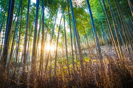 Beautiful bamboo grove tree in arashiyama area Kyoto Japan Imagens