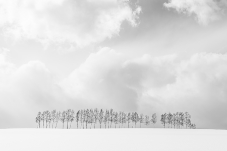 Beautiful outdoor nature landscape with group of tree branch in snow winter season Hokkaido Japan - Processing black and white color 版權商用圖片
