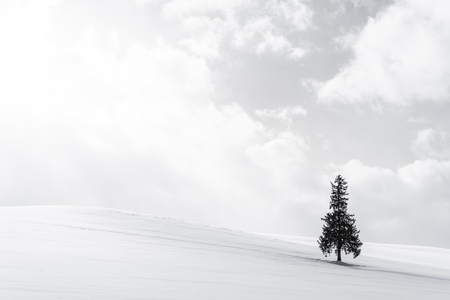 Beautiful outdoor nature landscape with alone christmass tree in snow winter weather season with sky and cloud