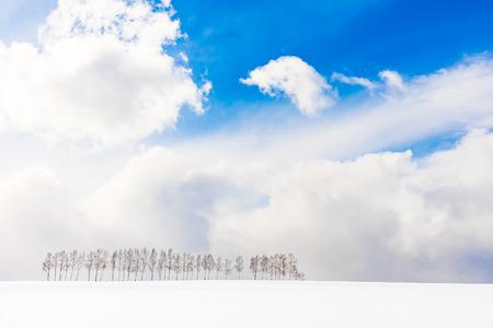 Beautiful outdoor nature landscape with group of tree branch in snow winter season Hokkaido Japan 版權商用圖片