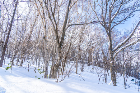 Beautiful landscape with tree and branch in snow winter season at Sapporo Hokkaido Japan Imagens