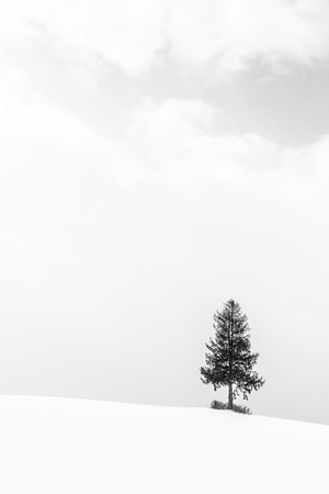 Beautiful outdoor landscape with lonely christmas tree in snow winter season - Processing Black and white color Imagens