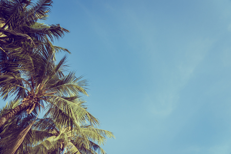 Low angle beautiful coconut palm tree with blue sky background and copy space Imagens