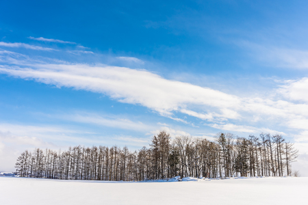 Beautiful outdoor nature landscape with group of tree branch in snow winter season Hokkaido Japan Imagens
