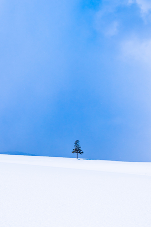 Beautiful outdoor nature landscape and christmas tree in winter snow season with copy space Imagens