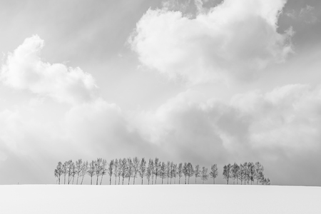 Beautiful outdoor nature landscape with group of tree branch in snow winter season Hokkaido Japan - Processing black and white color Imagens