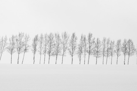 Beautiful outdoor nature landscape with group of tree branch in snow winter season Hokkaido Japan - Processing black and white color Standard-Bild