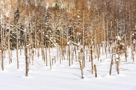 Beautiful outdoor nature landscape with blue pond tree branch in snow winter season Hokkaido Japan