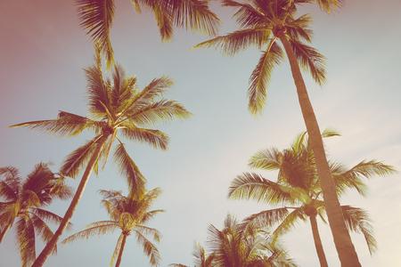 Hermosa naturaleza tropical con palmera de coco sobre fondo de cielo azul y nubes blancas Foto de archivo