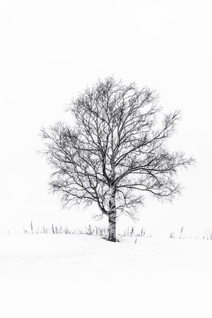 Beautiful outdoor landscape with lonely tree in snow winter season