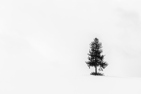 Beautiful outdoor landscape with lonely christmas tree in snow winter season - Processing Black and white color Stock fotó