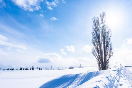 Hermoso paisaje natural al aire libre con el árbol de ken y maría en la zona de biei, Hokkaido, Japón Foto de archivo