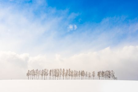 Beautiful outdoor nature landscape with group of tree branch in snow winter season Hokkaido Japan