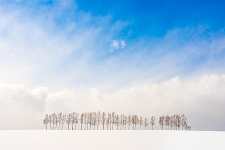Piękny krajobraz przyrody na zewnątrz z grupą gałęzi drzewa w sezonie zimowym śniegu Hokkaido Japonia