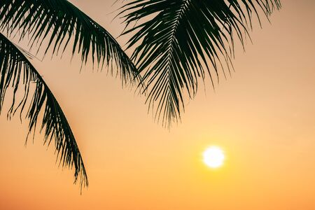 Beautiful outdoor nature with coconut leaf with sunrise or sunset time for relax travel and vacation 스톡 콘텐츠