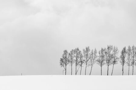 Beautiful outdoor nature landscape with group of tree branch in snow winter season Hokkaido Japan - Processing black and white color