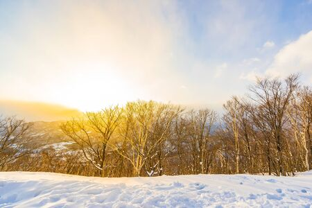 Beautiful landscape with mountain around tree in snow winter season at sunset time in Sapporo Hokkaido Japan 版權商用圖片