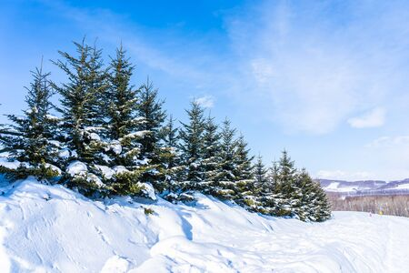 Beautiful outdoor nature landscape with christmas tree in winter snow season