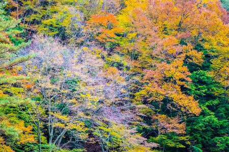 Beautiful landscape a lot of tree with colorful leaf around the mountain in autumn season 写真素材
