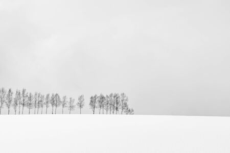 Beautiful outdoor nature landscape with group of tree branch in snow winter season Hokkaido Japan - Processing black and white color Stock fotó