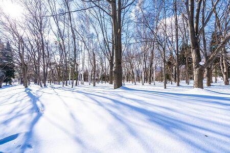 Beautiful landscape with tree in snow winter season for travel at Hokkaido Japan Foto de archivo - 129838304