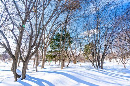 Beautiful landscape with tree in snow winter season for travel at Hokkaido Japan Foto de archivo - 129838333