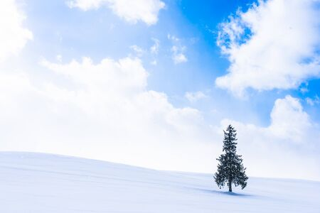 Beautiful outdoor nature landscape with alone christmass tree in snow winter weather season with sky and cloud Foto de archivo - 129838997