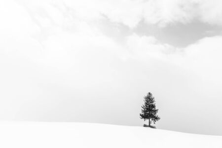 Beautiful outdoor landscape with lonely christmas tree in snow winter season - Processing Black and white color Foto de archivo - 129838583