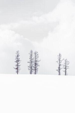 Beautiful landscape of lonely tree branch in snow winter season 写真素材