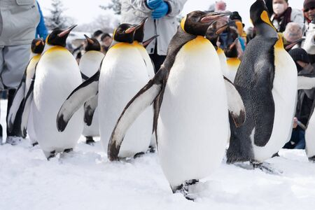 Group of penguin show in snow winter season