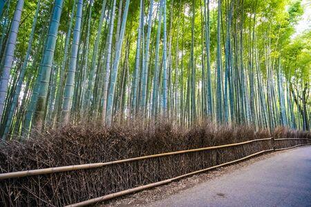 Schöner Bambushainbaum in Arashiyama-Bereich Kyoto Japan Kyoto Standard-Bild