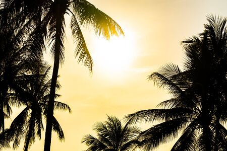 Beautiful sunset or sunrise with silhouette coconut palm tree and sky background