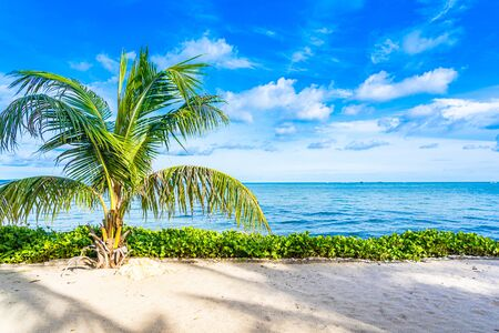 Beautiful landscape of beach sea ocean with coconut palm tree with white cloud and blue sky for leisure relax in holiday vacation Фото со стока - 131349489