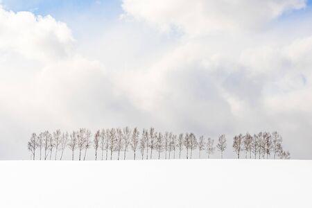 Beautiful outdoor nature landscape with group of tree branch in snow winter season Hokkaido Japan Фото со стока