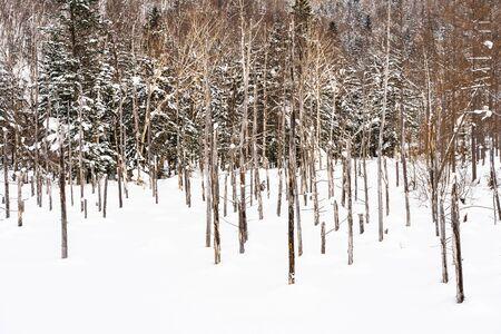 Beautiful outdoor nature landscape with blue pond tree branch in snow winter season Hokkaido Japan Фото со стока - 131349385
