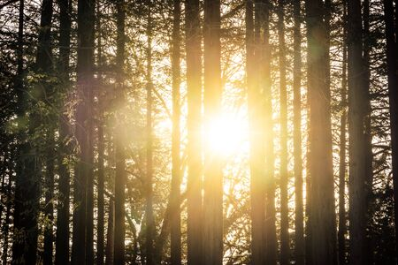 Beautiful outdoor landscape of tree in the forest with sunlight for nature background