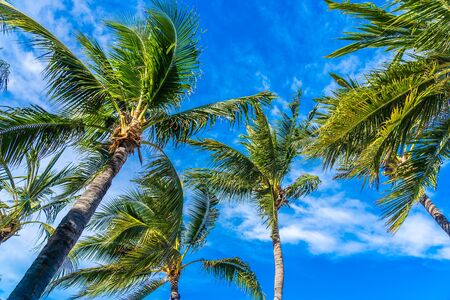 Beautiful outdoor tropical nature with coconut palm tree leaf on blue sky background Фото со стока