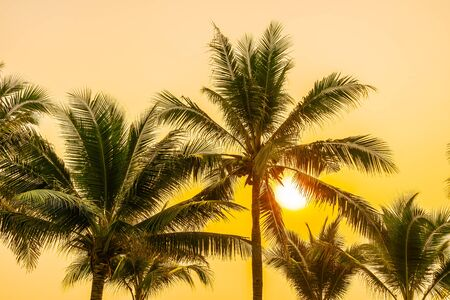 Beautiful nature with palm tree around sea ocean beach at sunset or sunrise time