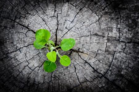 piccolo albero sul ceppo. Nuovo sviluppo e il rinnovamento come un concetto di business