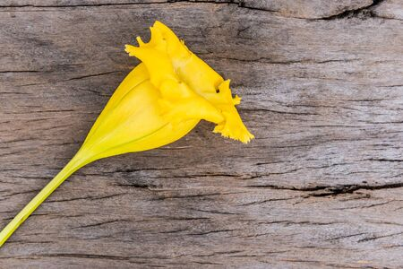 Wood texture background with yellow flower close up Stock Photo