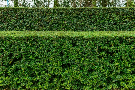 a well landscaped and manicured hedge of bushes with mulch and grass in a step pattern.